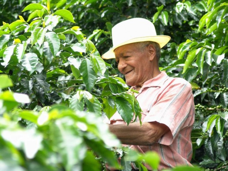 A Colombian coffee farmer