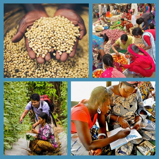 What is Feed the Future? Why is food security important?