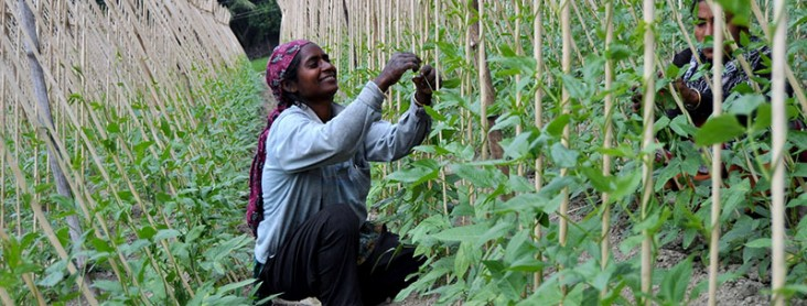 Photo of woman harvesting vegetables