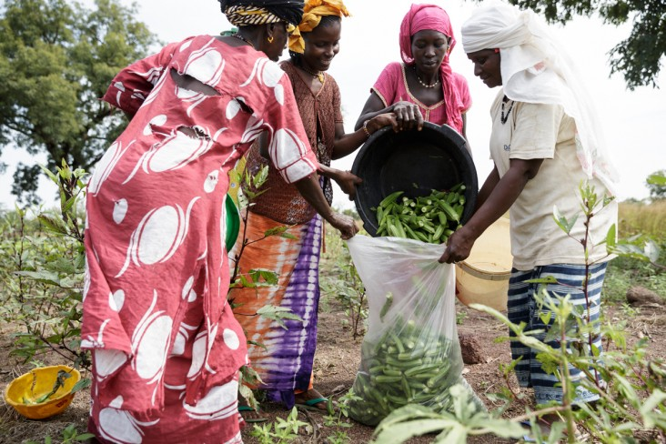 A group of women harvesting crops