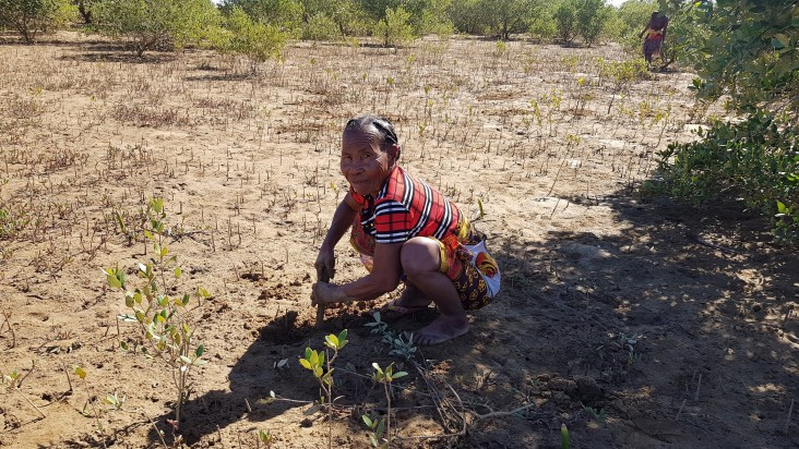 Local communities are taking the initiative to reforest the mangroves