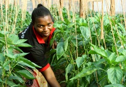 Upendo Women Growers Association's Chairwoman Rose Peter shows off sweet peppers