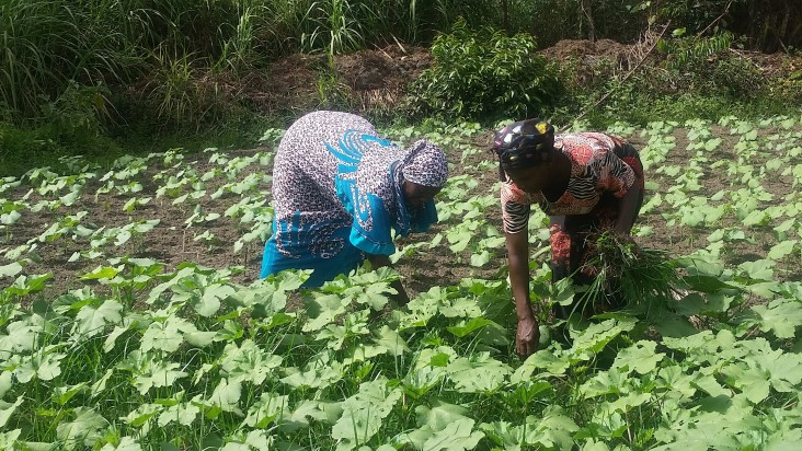 USAID supports agricultural development programs in Guinea for food security and improved nutrition.