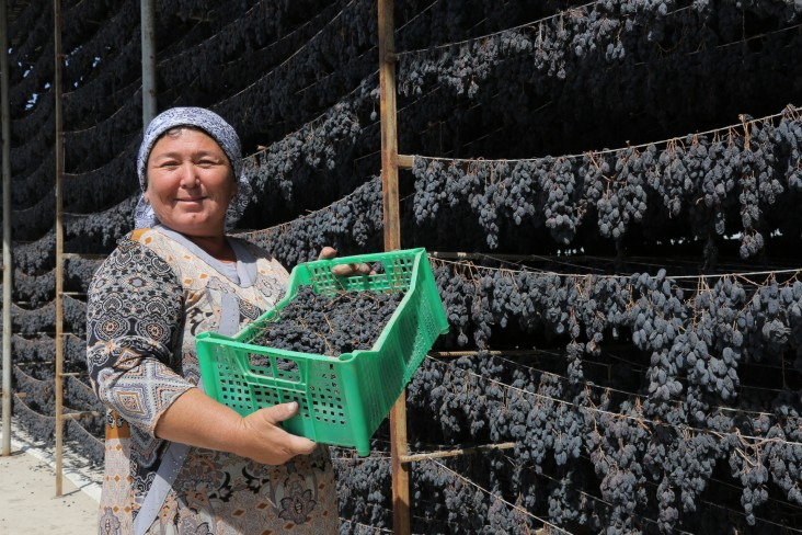 Since 2015, the USAID Agricultural Value Chain activity has worked with public and private sector partners to promote high-value-added commercial horticulture in Uzbekistan.