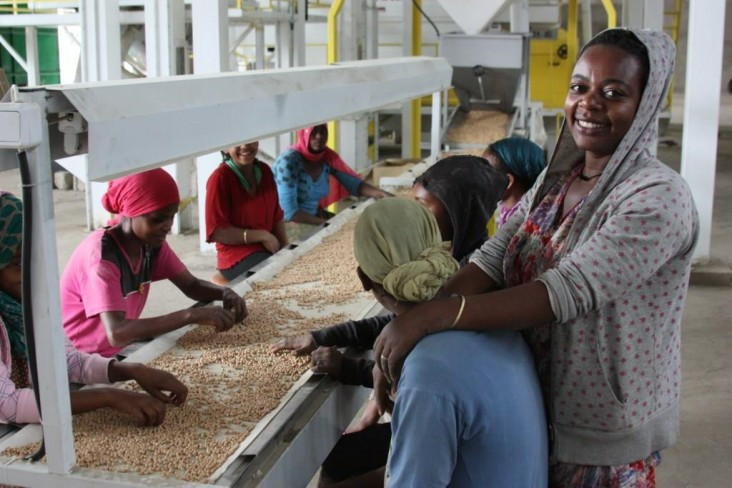 Workers sort chickpeas at the Agro Prom seed processing facility in Adama.