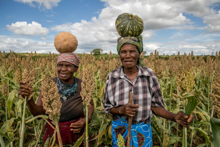 The Feed the Future Zimbabwe FARM activity will target 20,000 households in Manicaland and Masvingo provinces.