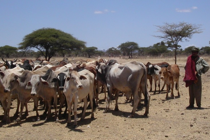 The PRIME project will help pastoralists reach livestock markets, transition to new livelihoods, and adapt to climate change.