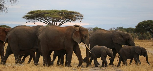 USAID Promoting Tanzania's Environment, Conservation, and Tourism (PROTECT) Webinar