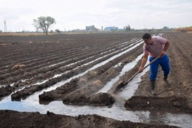 Man works on irrigated land