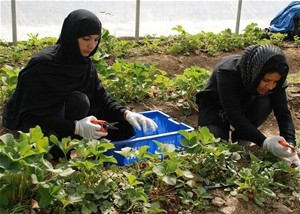 Two women work in one of the greenhouses established by USAID.