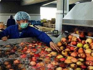 A worker inspects pomegranates before the fruit is turned into juice concentrate.
