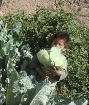 Young boy shows the fruits of the kitchen garden that will provide a variety of nutritious vegetables.