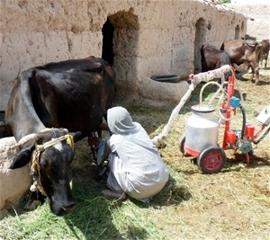Learning standard methods of processing milk became available through a grant teaching animal husbandry skills.