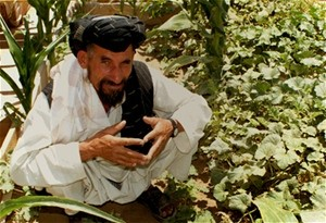 Ahmad Jan cultivates a six-hectare plot of land in Kandahar Province with his 11 children and another 20 family members.