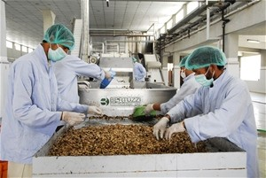 Workers at the Omaid Bahar Fruit Processing Facility, established in Kabul with USAID support, sort through mulberries from farm