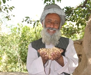 Aminullah shows off his bumper harvest of almonds