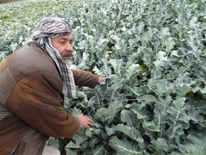"""Growing broccoli has made my life much easier."" - Sayed Amir, farmer in Tehlanchi village, Parwan province"