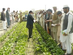 A representative from a privately owned agricultural depot in Nangarhar province hands out leaflets to farmers