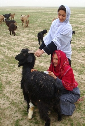 Women in Kunduz Province learn how to use combs to harvest valuable cashmere from their goats.