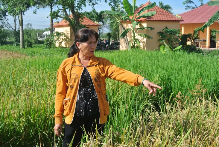 Ms. Le Thi My Dung monitors her rice field.