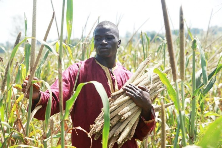 Oumar Niasse with samples of different varieties of millet.