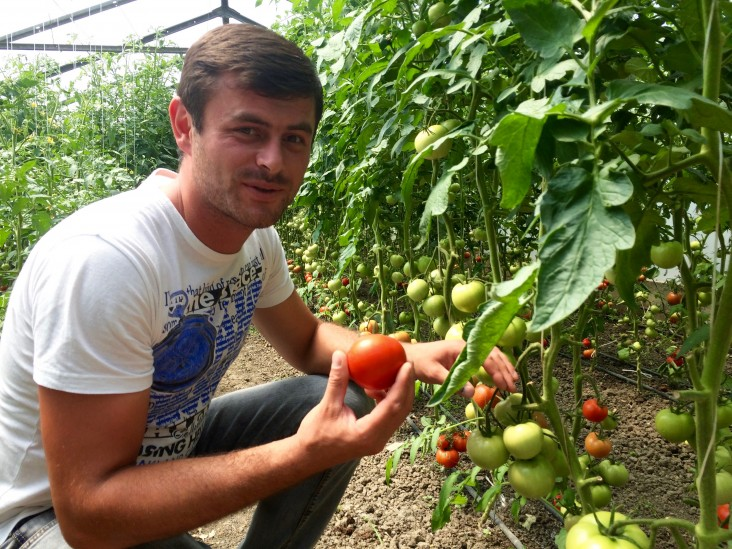Giorgi Shavadze set up his first greenhouse in 2015 with USAID assistance.