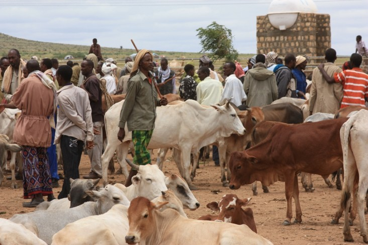 Pastoralists with cows at a market. Credit: Nena Terrell/USAID