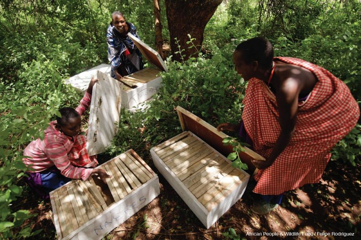Maasai women assemble environmentally friendly beehives to hang in the Tanzanian bush.