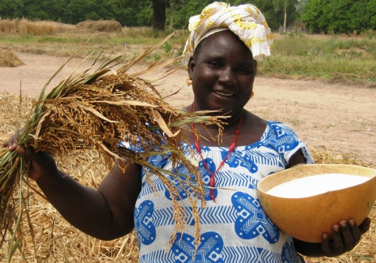 Coumbayel Coulibaly displays a calabash full of the high-yielding New Rice for Africa varietal.