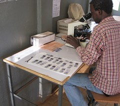 A malaria microscopist examines blood smears in a health center in Oromia Region.