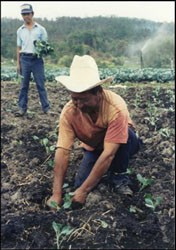 Luis, a farmer in Honduras