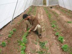 In Herat Province, farmer Mola Shah Gool earned $660 from his greenhouse during the winter, a time period when he normally has n