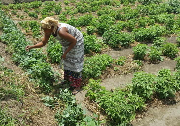 Djenabou Camara working on her farm in Tougnifily, Boffa.