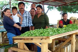 Sebastian Araya Sr., who, with his family, oversees okra being sorted and packed for export
