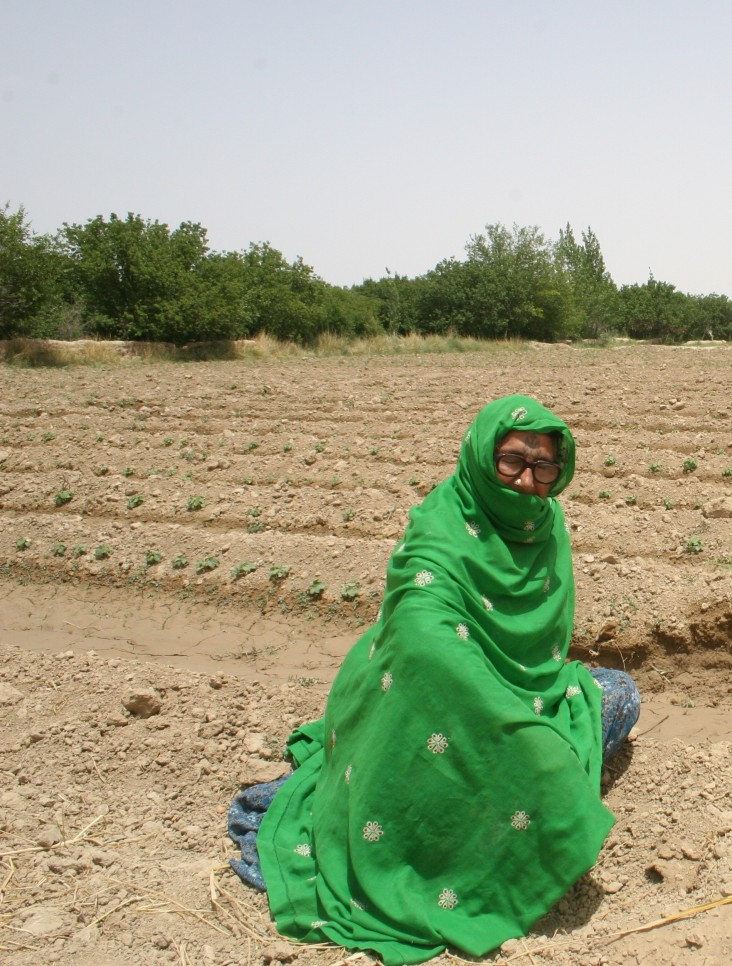 A Pakistani grandmother working in her garden