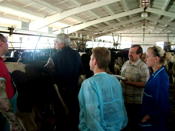 USAID volunteer Dan Haskins (left) palpates a cow while a few of the Dzerzhinsk farm veterinarians look on.