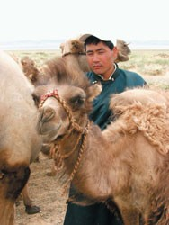 Mr. Ikhbayar with his camels.