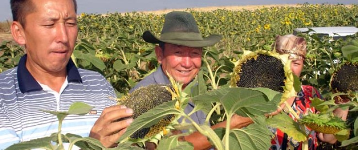 USAID's Kyrgyz Agro-Input Enterprise Development project helped to stimulate the production of 2,500 metric tons of corn and sun