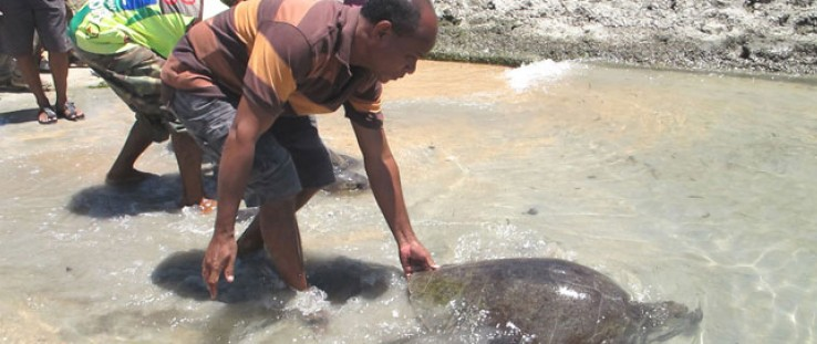 Edmundo da Cruz releases a rescued turtle in Com.
