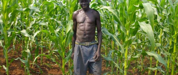 Farmer James Sworo with the maize he planted two months earlier in Kajo Keji County, South Sudan