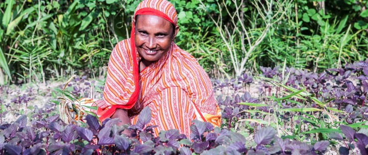 Shafia Begum works on her vegetable plantation near her home in Langurpar village, Sreemongol district.