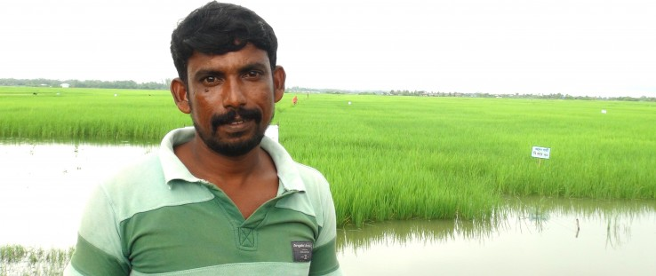 Mohammad Mofizul Islam Gazi stands in front of his rice field.