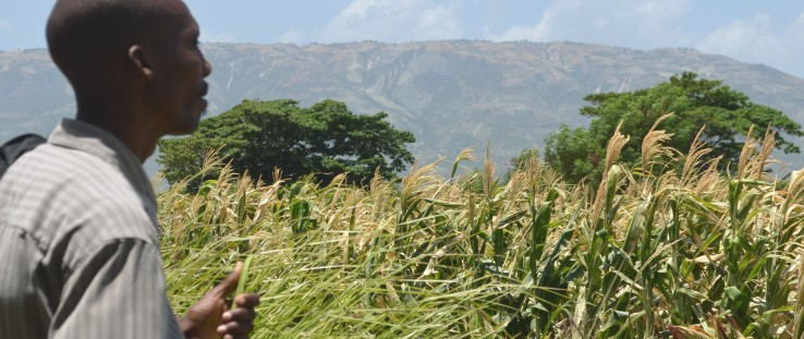 Master farmer Auguste Jean-Emmanuel looks out over the corn fields at the Rural Center for Sustainable Development in Bas-Boen.