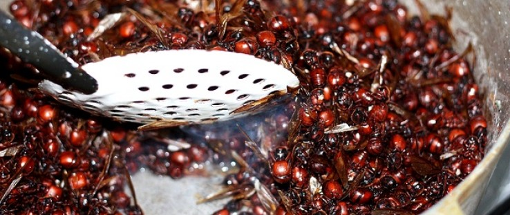 Chocolate-covered ants are just one of the gourmet products sold by CIBUM S.A.S.