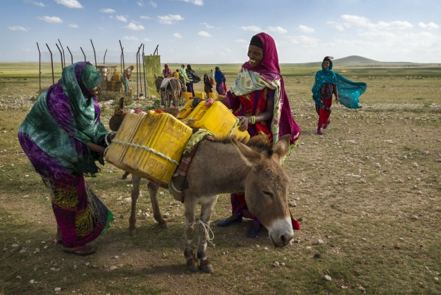Donkeys Transport Water