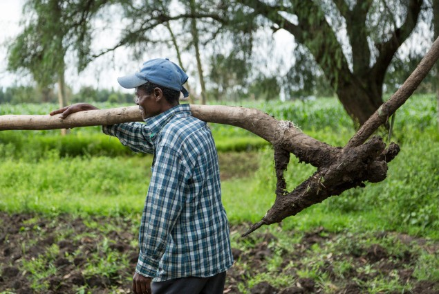 A man carries a plow to the field.