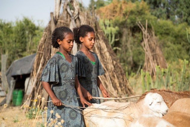 Diversified income. Thanks to USAID, Tumay Ashebir and his wife Alem Tekle and their family (two of his daughters are shown here) are engaged in everything from sheep rearing and fattening to producing vegetables, grains, and honey. They even run a small transportation business with their mule cart. Their assets, which now include 21 sheep, 10 cattle, a cart, beehives, and a year's worth of food in storage, continue to grow.