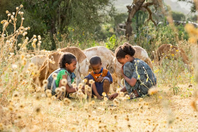 Diversified income. Thanks to USAID, Tumay Asebir and his wife Alem Tekle and their family (three of his children are shown here) are engaged in everything from sheep rearing and fattening to producing vegetables, grains, and honey. They even run a small transportation business with their mule cart. Their assets, which now include 21 sheep, 10 cattle, a cart, beehives, and a year's worth of food in storage, continue to grow.