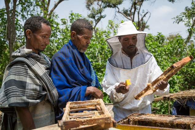 Abebaw Melesew used the training he received from USAiD to turn around his beekeeping business. He is now a model farmer, training others to succeed in honey production.