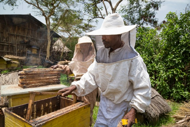 Abebaw Melesew and his wife Abay Desalegn work on their hives. Abebaw used the training he received from USAID to turn around his beekeeping business. He is now a model farmer, training others to succeed in honey production.